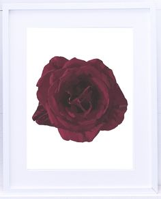 We Are All Connected, Red Roses, Giclee Print, Contemporary Art, Fine Art, Frame, Artist, Flowers, Picture Frame