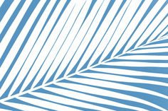 Palm Tree Silhouettes Blue and White Print Art Print