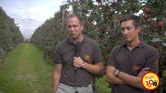 La pomme Ariane vue par ceux qui la distribuent - Cerise et Potiron En septembre dernier, un voyage de presse a été organisé dans les vergers du coteau lyonnais pour fêter les 10 ans de notre belle pomme Ariane ! A cette occasion, les distributeurs d'Ariane racontent ce qu'ils aiment le plus chez leur pomme préférée.