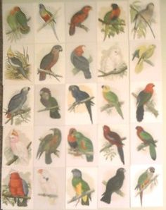 Parrots from around the World Limited Edition set of 25 Trading Cards