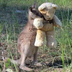"""Baby Animals on Twitter: """"WE INTERRUPT YOUR DAY TO SHARE WITH YOU A PICTURE OF A KANGAROO HUGGING A TEDDY BEAR https://t.co/b6xTRj9HBC"""""""