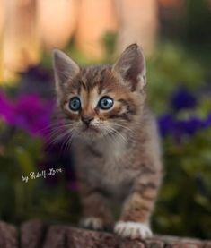 (ᵔᴥᵔ) by Yuriy Korotun on Lightroom, Photoshop, Crazy Cat Lady, Crazy Cats, Kittens Cutest, Cats And Kittens, Cat Flowers, Curious Cat, Pretty Cats