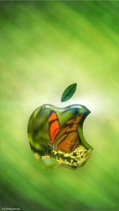 Glassy Colors of Apple wallpapers Wallpapers) – Art Wallpapers Plain Wallpaper, Watch Wallpaper, More Wallpaper, Cellphone Wallpaper, Wallpaper Backgrounds, Iphone Wallpapers, Apple Background, Apple Logo Wallpaper Iphone, Apple Icon