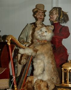 weird taxidermy   Weird Taxidermy Of The Night   Curio Cabinet