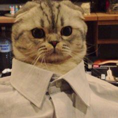 . roku the cat .