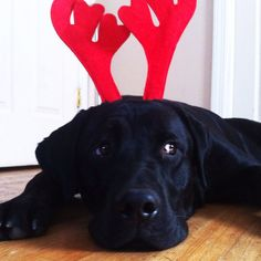 Grady's first Christmas