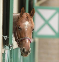 Tips for protecting your horses from vesicular stomatitis: