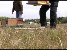 ▶ Buckfastbees bevruchtingsstand - YouTube