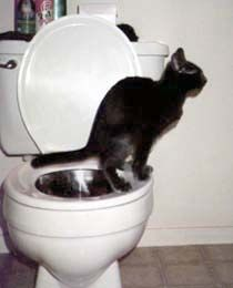 How To Toilet Train Your Cat (Remember Jinxie from Meet the Fockers? He was toilet trained!)