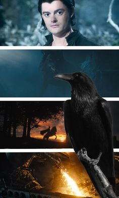 My favorite character in Maleficent was Diaval, the crow.