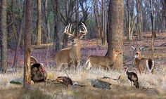 North American Wildlife Paintings | deer art pictures wildlife artwork north american wildlife paintings ...
