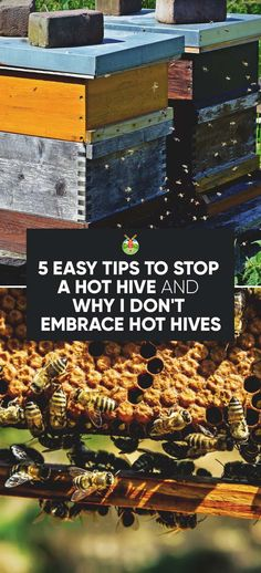5 Easy Tips to Stop a Hot Hive and Why I Don't Embrace Hot Hives Bee Hive Plans, Bee Swarm, Raising Bees, Raising Chickens, Bee Boxes, Low Maintenance Garden, Easy Garden, Garden Ideas, Whole Foods Market