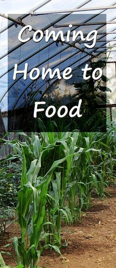 What's growing in late July?  Coming home to food after being away for a week is a good way to slide back into homesteading. There's a lot of food going on over here. via @RobinFollette