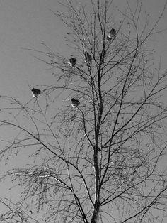 Nådefåglar!
