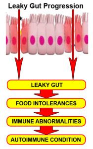 The wall of the intestine is considered semi-permeable. This means it only allows certain things to enter the bloodstream and block other things from entering the bloodstream. For instance, specific molecules and nutrients are allowed to pass through but toxins and large undigested food particles are blocked. When you have leaky gut, the pores in your small intestine widen and this allows undigested food particles and toxins, that would normally be blocked, to enter your bloodstream.
