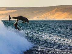 Surfista pega ondas acompanhado por golfinhos na Austrália