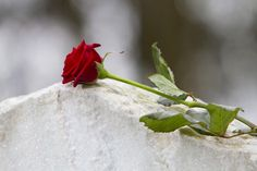 red rose on gravestone in cemetery - roses imagens e fotografias de stock Phish, How To Know, How To Find Out, All Is Lost, Grieving Mother, Funeral Expenses, End Of Life, Elderly Care, Federal
