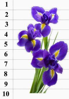 Montessori Kindergarten, Preschool, Bird Crafts, Flower Crafts, School Folders, Iris Tattoo, Teacher Inspiration, Primary Classroom, Paper Flowers