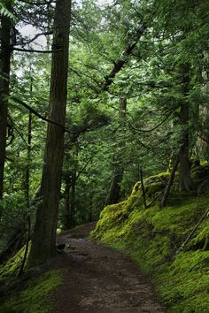 mountain path, orcas island