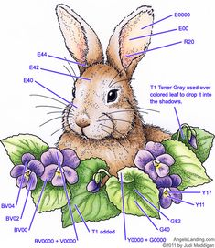 Copic Coloring Guide: Bunny & Violets