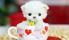 To Cute! I love puppies!