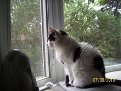 Lili at window