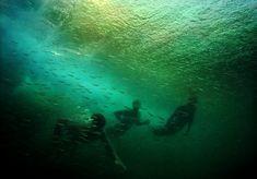 Baitfish Surry Hills, Northern Lights, Germany, Australia, Sport, Gallery, Artwork, Travel, Life