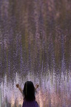 あしかがフラワーパーク 2013 #3 (Ashikaga Flower Park 2013 # 3) by Kobaken++