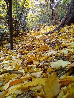 Pădurile Neamţului
