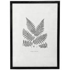 Vægkunst - Fern - No 4 - 53,5*73,8 cm. |  - Klik for mere information