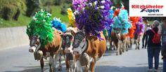 Hier tanzen die Kühe! http://my.austria.at/index.php?option=com_k2&view=item&id=3712:hier-tanzen-die-k%C3%BChe&Itemid=144&lang=de