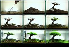 Aquascaping 'how-to' reduced to 9 pictures - I imagine it's probably more complex than this ;)