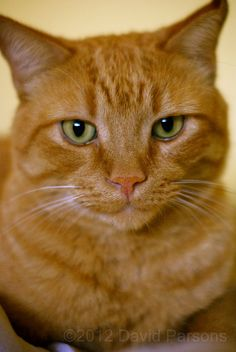 Orange Tabby Cat Could have been our Rusty!
