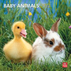Baby Animals Wall Calendar: Chick, duckling, piglet, calf, foal, puppy, and kitten—the tiny essence of each species made perfect in baby form. Note the noble beings wrapped in swaddling skin, tufted hairs, downy feathers. Cuddle up in cuteness with this adorable baby animals calendar.  http://www.calendars.com/Baby-Animals-2013-Wall-Calendar/prod201300004286/?categoryId=cat00172_vc=PDPZ1=1=PDPZ1