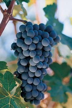 Chile Tours: Tour Viña Concha y Toro y Santa Rita #Wine