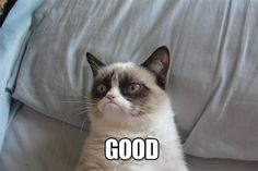 tard the grumpy cat pictures | ... ] Man Fatally Falls From Tree While Trying To Rescue Cat: Gothamist