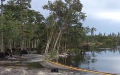 A massive sinkhole opened up in Louisiana Wednesday, swallowing whole cypress trees in less than a minute.