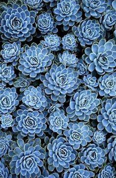 Jolies fleurs More