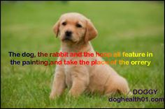 Quotes about DOGGY