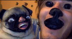 25 Horrifying And Hilarious Animal Face Swaps (Pewds and his dog Puga! This used to be his profile pic on Twitter)