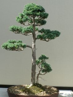 Bonsai trees image by ElBohemia on Photobucket