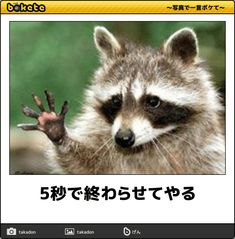 5秒で終わらせてやる Illustrations And Posters, Animals And Pets, Jokes, Cats, Funny, Meme, Humor, Pets, Illustrations Posters