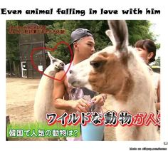 "That animal is just like *Oh, Taeyang ♥* x""D he's to attractive for real xD that animal better back off!!! LOL"