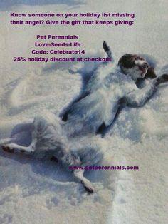Looking for that perfect gift for a pet lover on your list? Gift certificates available! Also, you can order Pet Perennials to celebrate the life of a pet, or loss of one.. www.petperennials.com and also available on Amazon.com