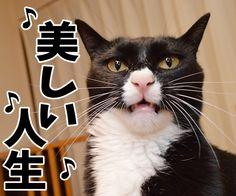 愛のメモリー(カバーアルバム「AZUDAI」より) - http://iyaiyahajimeru.jp/cat/archives/62890