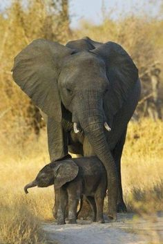 Beautiful Elephants