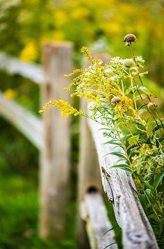 happy fence friday by Vicki Maher (vrose), via Flickr
