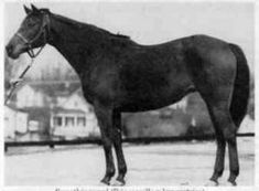 Somethingroyal: dam of Secretariat