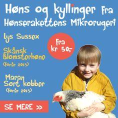 Høns og kyllinger fra Hønserakettens Mikrorugeri fra kr 50,-