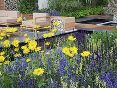 High-contrast plantings of yellow and purple
